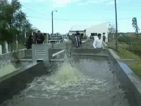Informe cria de peces pilar paraguay youtube for Cria de peces en estanques de cemento