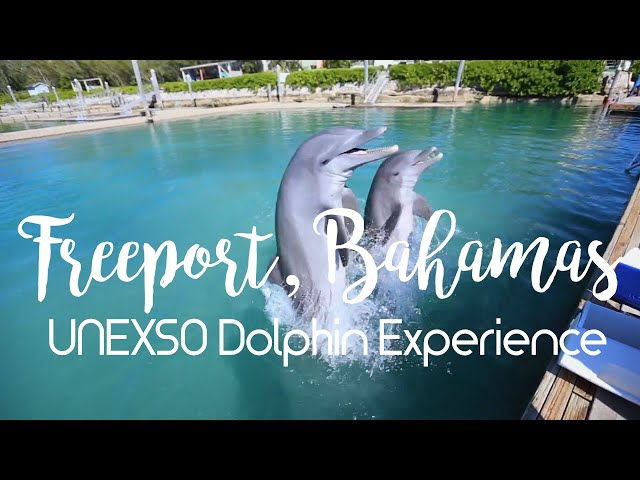 UNEXSO Dolphin Experience - Freeport, Grand Bahama - 1080p HD