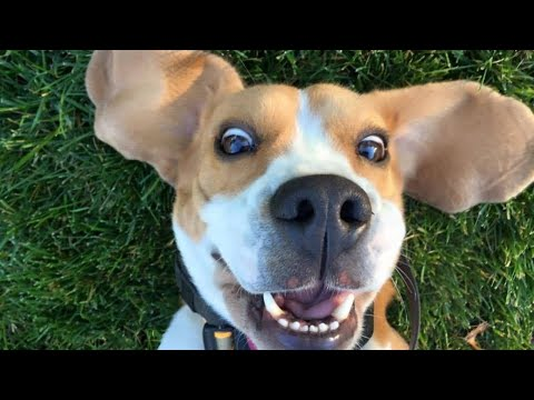 🐶 FUNNY DOGS 😄 FUNNY VIDEOS 🤣 TRY NOT TO LAUGH 😝