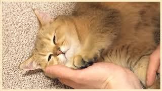 남집사 손베개가 최고로 편하다냥..⭐ 껌딱지 아기 고양…