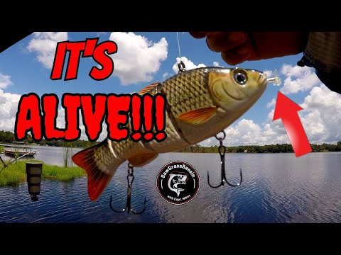 ROBOTIC LURE Vs REAL LIVE BAIT!! Bass Fishing Challenge!! (Giant Bass Caught!)