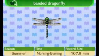Animal Crossing New Leaf - 100% Bug Encyclopedia Complete