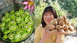 kiwi đầu mùa ở Mỹ,  cách sấy kiwi, làm mứt kiwi thơm ngon, dai mềm