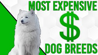 Top 10 Most Expensive Dog Breeds