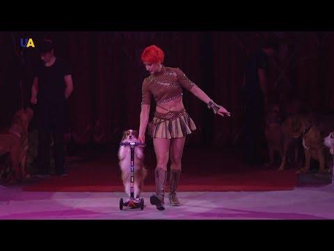 Вопрос: Как и где нашли сбежавшую из цирка собаку Ангела?