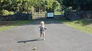 Saoirse chasing a ball!