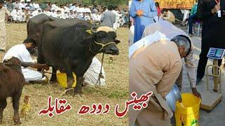 Buffalo Milk Competition Part II. Video By Ch. Imran Nadeem Gujjar