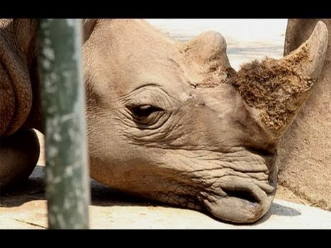 Concern over Vietnam's rhino imports