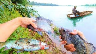 Đi bắt cua đồng, đi bắt nhái làm mồi câu cá lóc và kết quả 😂