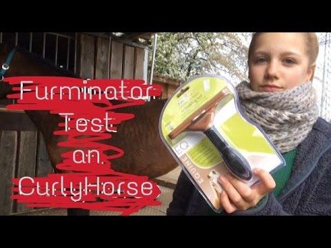 Furminator test an Curly Horse 🐴