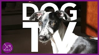 Dog TV: Ultimate Entertainment Video for Dogs! (2020)