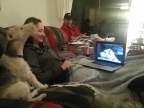 0 2 cães conversando pelo Skype