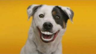 Pedigree(R) Denta Stix(TM) CH-TV Spot (d-version)