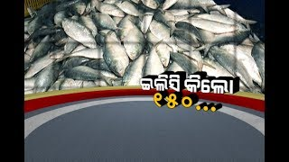 Damdar Khabar: Ilish Fish Price Drops To Rs.150/Kg