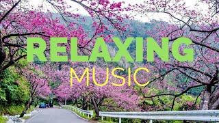 딥 슬립 음악 : 진정 음악, 편안한 음악, 진정 음악, 진정 음악