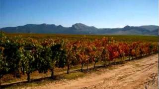 ¿Cuáles son los ácidos orgánicos más presentes en el mosto de la uva?. Campo Viejo-Onda Cero