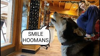 Dog loves to make people Laugh and Smile every day