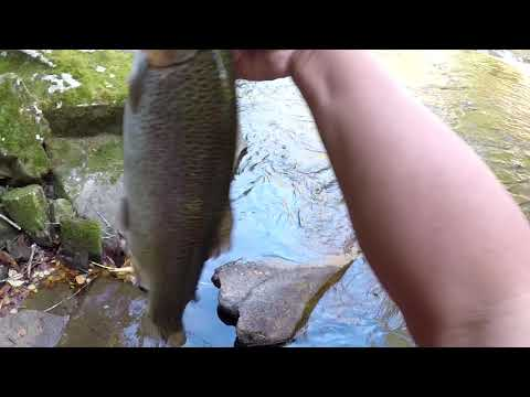 Cherokee Trout Fishing, 8 Caught