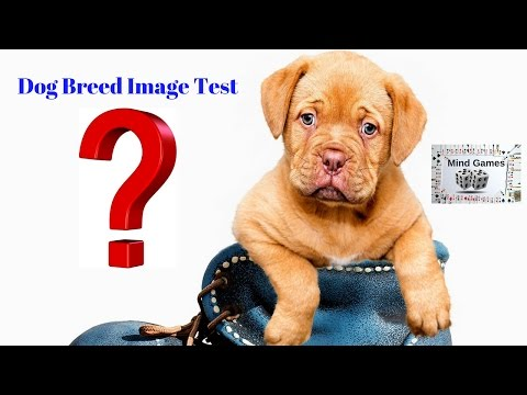 DOG BREED IMAGE TEST CHALLENGE | MATCH THE PHOTO WITH THE DOG QUIZ