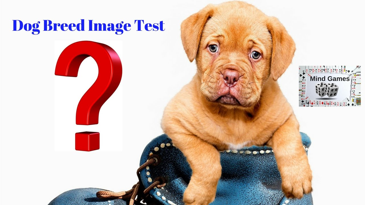 Dog Breed Image Test Challenge Match The Photo With Quiz