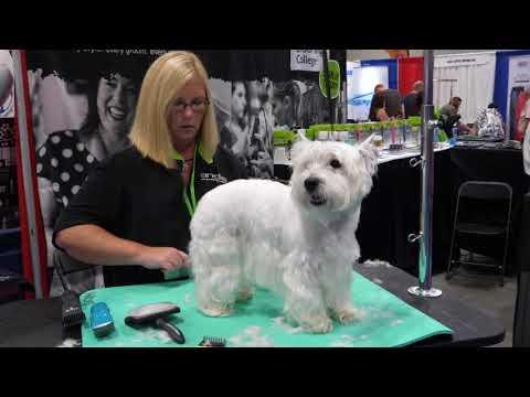 Westie Pet Trim with Tammy Siert