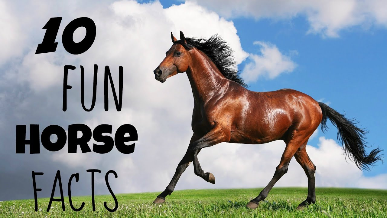 10 Fun Facts About Horses! - YouTube