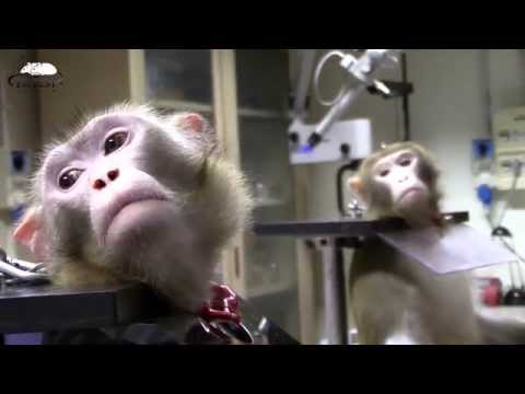Primates in biomedical Research