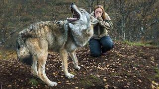 Женщина спасла эту волчицу, а через пол года волчица пыталась спасти ее от смерти