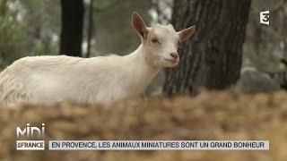 ANIMAUX : En Provence, les animaux miniatures sont un grand bonheur