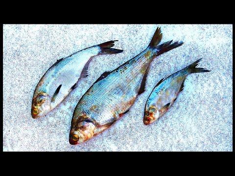 Three Catfish Baits Every Fisherman Must Have