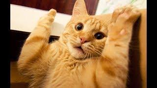Приколы с котами | ТОПовая подборка видео приколов с котиками