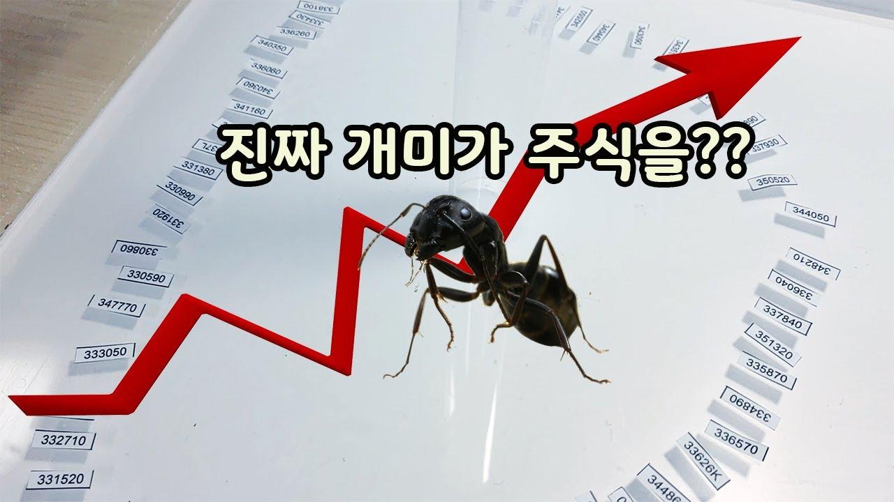 진짜 개미가 고르는 주식을 사보았습니다(개미 키우기와 주식의 혼종 영상) [오브리더]