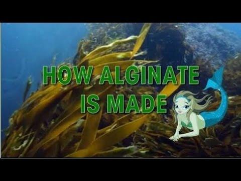 The Making of Sodium Alginate and Its Surprising Uses, Alginic Acid
