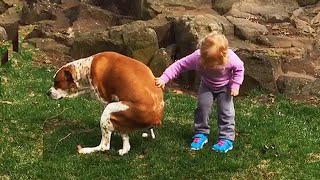 Kids and babies Playing With pets - Funniest Home Videos - Try Not to laugh