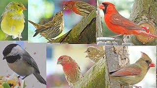 BEAUTIFUL Video for Cats and Dogs to Watch! Large Variety of Birds