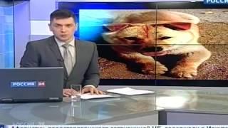 На России начали выращивать съедобных собак