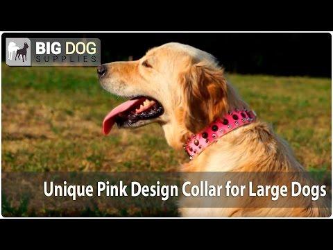 Golden Retriever, Shar Pei, Rottweiler and Moscow Watchdog Showing Off Studded Pink Collar