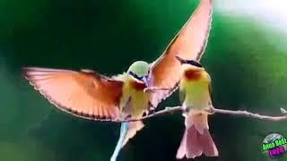 Какая птица покровительствует вам, в зависимости от месяца вашего рождения?