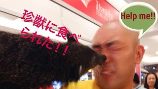 タイに生息する希少動物・หมีขอ(ミーコー)と偶然の遭遇!そして・・・