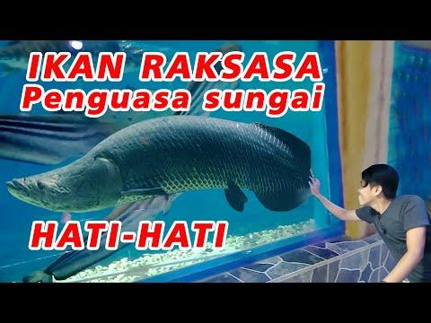 purbasari-shower-mas-|-giant-aquarium-|-purbalingga-regency,-central-java
