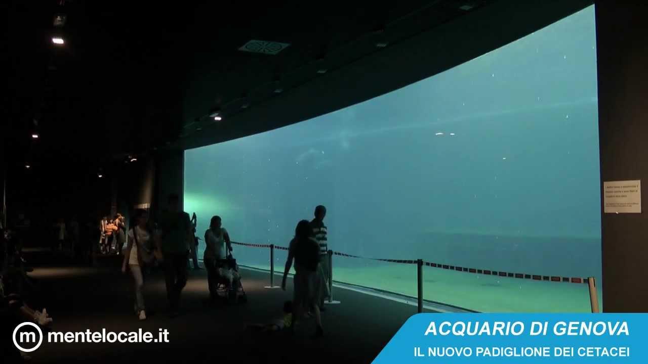 Acquario di genova i delfini nel nuovo padiglione dei for Acquario nuovo prezzi