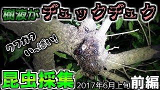 すごいよ樹液がw 【2017年昆虫採集(カブクワ)プレイリスト】 https://w...