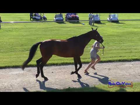 005J2 Barbara Flynn on P K  Cooper CCI1* FEI Jog 2 Rebecca Farm July 2018
