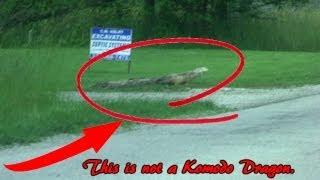 No Komodo Dragon Caught On Tape!