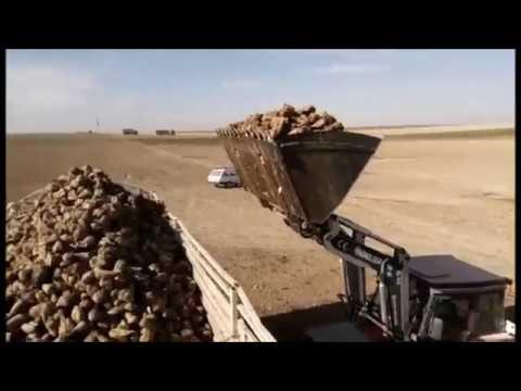 Ağılbaşı köyü kulu konya.  Başak traktör pancar yükleme