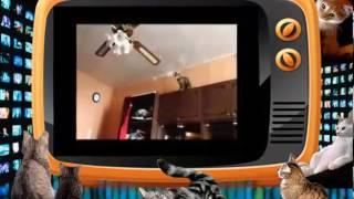Кот- залез-на-вертолет и БОЛЬШA-A-A-Я черепаха! Приколы про кошек.(Прикольное видео про кошек, которые веселятся как могут. Просто бесбашенные!!!, 2014-02-04T19:15:18.000Z)