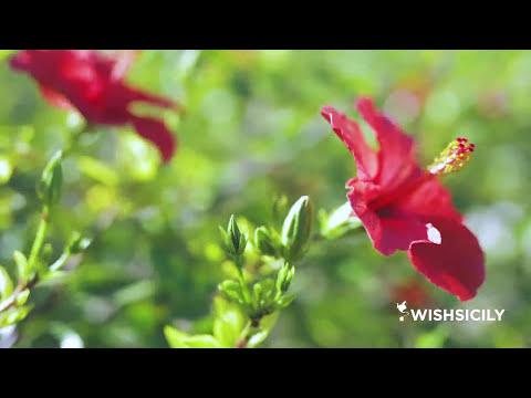 Sicily Beach Villa Casa Ulisse Wishsicily Com Youtube
