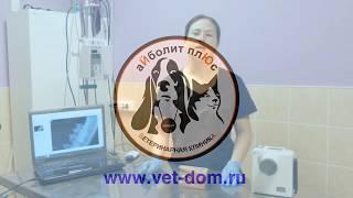Стоматологический рентген животных - простыми словами