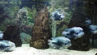 Аквариум с редкими рыбками сильно гудит