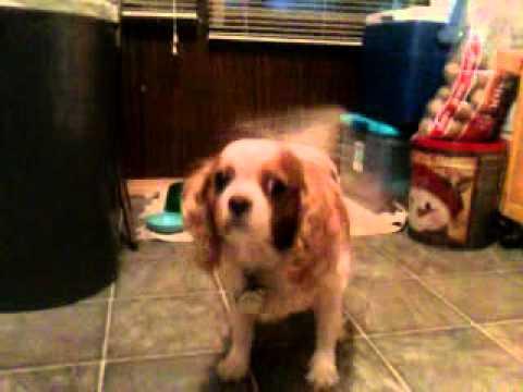 Saddie the Derpy Dog